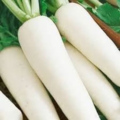 Picture of Radish  ( Malasia)/ per kg