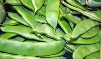 Picture of Broad Beans (India)/per kg