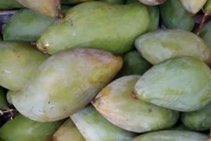 Picture of Mango (India)/per kg